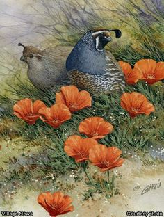 Quail and Poppies watercolor painting, was created by Joe Garcia, http://www.thevillagenews.com