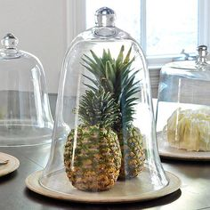 Steal of the Day · wisteria · bell jar · glass cloche