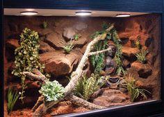 Terrariums Gecko, Bartagamen Terrarium, Lizard Terrarium, Terrariums Diy, Gecko Vivarium, Reptile House, Reptile Habitat, Reptile Cage, Bearded Dragon Vivarium