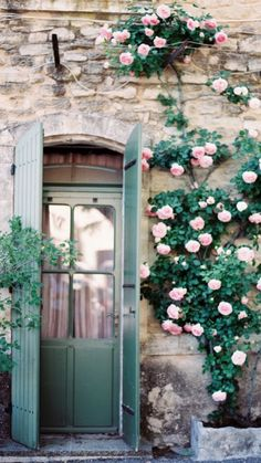 Pink climbing roses?