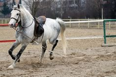 To help identify which leg is lame, watch the horse trot in circles both directions. Lameness can't be differentiated at a canter, only at a trot.