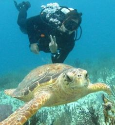Scuba diving & snorkeling Riviera Maya Cancun. Can I just say TURTLE