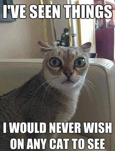 #cats #animals #kittens #pets