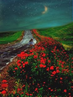 Rumi - If the entire world is covered with the blossoms you have labored to plant. what do you think will happen. Beautiful World, Beautiful Places, Beautiful Moon, Beautiful Flowers, Rumi Poetry, Rumi Quotes, Qoutes, Quotations, Jolie Photo