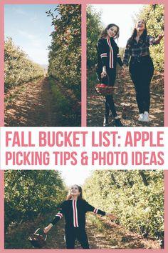 Bay Area apple picking. Apple picking photo ideas. Northern California Travel, Photo Tips, Photo Ideas, Bay Area, Where To Go, Bucket, Pumpkin, Apple, Activities