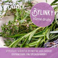 Mít bylinky po ruce se vždy hodí, ať už si je pěstujeme na záhonku nebo v truhlíku na okně. K dochucení pokrmů jsou ideální přísadou.   V našem zahradním centru naleznete široký výběr bylinek, nabídka je platná do vyprodání zásob. 👨🌾 #bylinky #herbs #rozmaryn #levandule #oregano #petrzel #starkl #zahradnik #zahradnictvi #caslav
