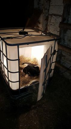 21 DIY Wood Pallet Goat Shelter If you're raising heritage birds for breeding, you'll want to come after a different feeding program Cattle Farming, Goat Farming, Livestock, Goat Shelter, Animal Shelter, Sheep Shelter, Douche Camping, Farm Hacks, Goat Pen