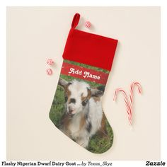 Flashy Nigerian Dwarf Dairy Goat Kid Christmas Stocking Christmas Card Holders, Christmas Cards, Kids Christmas Stockings, Nigerian Dwarf, Santa Claus Is Coming To Town, Christmas Animals, Goats, Dairy, Christmas E Cards