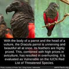 Cute Funny Animals, Cute Baby Animals, Animals And Pets, Beautiful Birds, Animals Beautiful, Wtf Fun Facts, Weird Animal Facts, Crazy Facts, Animal Memes