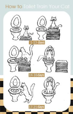 Cats Toys Ideas - How-to-Toilet-Train-Your-Cat - Ideal toys for small cats Cat Toilet Training, Dog Minding, Easiest Dogs To Train, Ideal Toys, Small Cat, Litter Box, Dog Training Tips, Cat Toys, Dog Cat