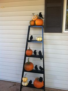 Pumpkins and Crows on an Old Ladder!