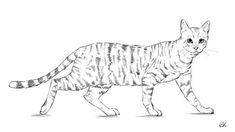 Gatos para colorear 4 Simple Cat Drawing, Cat Face Drawing, Black Cat Drawing, Cute Cat Drawing, Realistic Drawings, Love Drawings, Animal Drawings, Easy Drawings, Disney Drawings