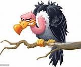 cartoon vulture free clipart - Yahoo Image Search Results