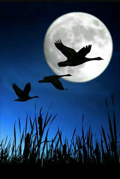 Wild geese that fly with the moon on their wings