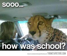 Sooo... how was school? | #cheetah #lol