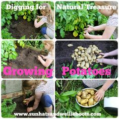 Sun Hats & Wellie Boots: Gardening with Kids - Growing Potatoes