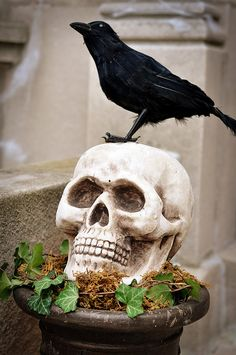 scary planter-add the phrase, Never More, to the skull or on a piece of paper or wood!