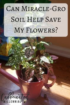 Can Miracle-Gro Soil Help Save My Flowers-