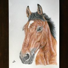 Another Christmas commission😊🎉🐴 #equine #horse #equineart #art #drawing #horsedrawing #nawden #pencildrawing #horseart #artfido #featuring_art #drawing #sketch #instadraw #noahsart #worldofartists #smartartfeaturing #nawden #instartpics #artistsdrop #artistshelp #art_appreciation_ #sketch_daily #sharingart #support_for_art #support_for_artists #instaarte #animalcreatives #horseart10 #horsesofinstagram #dailydrawing #young_artists_help