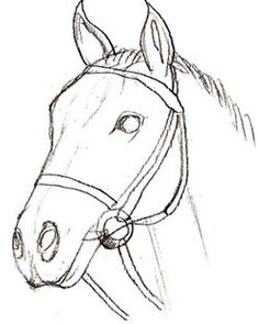 Animal Drawings How to Draw a Horse Head, step 5 Easy Horse Drawing, Horse Head Drawing, Horse Drawings, Realistic Drawings, Art Drawings Sketches, Animal Drawings, Drawing Step, Pencil Drawings, Dog Drawing Tutorial
