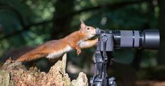 http://www.msn.com/en-ca/news/2015yearinreview/comedy-wildlife-photography-awards/ss-BBmps5P?ocid=TSHDHP