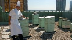 To bee or not to bee. Exploring The Fairmont Royal York's rooftop apiary with Executive Sous Chef Andrew Court.
