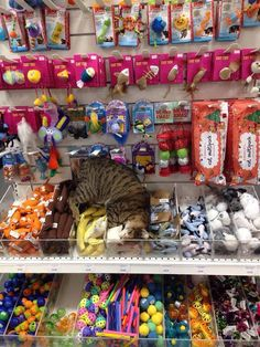Funny pictures about This Kitty Just Found Cat Heaven. Oh, and cool pics about This Kitty Just Found Cat Heaven. Also, This Kitty Just Found Cat Heaven photos. Cute Funny Animals, Funny Cute, Cute Cats, Hilarious, Funny Jokes, Funny Gifs, Videos Funny, Viral Videos, Crazy Cat Lady