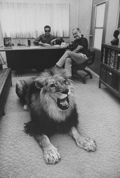 become close friends with a lion