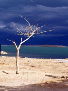 ✮ Tree at the Dead Sea