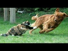 "Funny Dog Vines 2014 - YouTube Efstratios ""Elias"" D. Argyropoulos and Prima Capital Group"