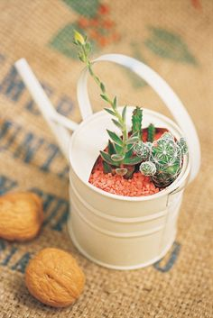 仙人掌+貝殼砂
