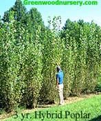 Fast growing trees are often used as privacy hedges. The Thuja Green Giant isone of our mostpopular treesgrowing in zones 5 through 9. Now available in a new size!