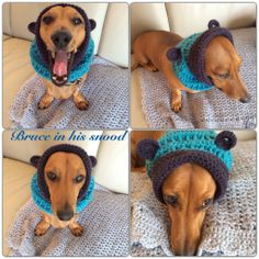 Bruce wearing his snood from Buttercup Crochet Designs