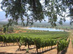 Weingut El Principal - Schmelzwasser aus den Anden speist den See im Hintergrund, aus dem die Reben in trockener Zeit mit Tröpfchenbewässerung versorgt werden.
