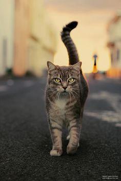 """""""Street cat 2"""" by raquel lopez-chicheri"""