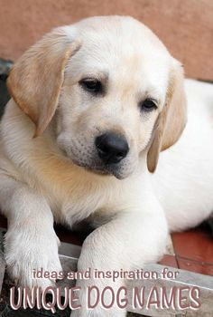 unique dog names - original ideas and inspiration for naming your puppy