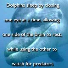 Random Facts: Dolphins sleep with one eye open!