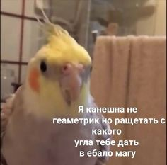 Stupid Quotes, Stupid Memes, Funny Video Memes, Funny Relatable Memes, Very Funny Texts, Hello Memes, Happy Memes, Russian Memes, Current Mood Meme