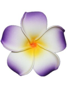Purple & White nice flowers Hawaii Plumeria