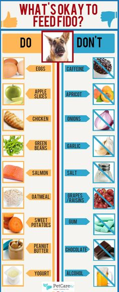What People Food Dogs Can and Cannot Eat Infographic