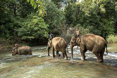 Viaggi in Cambogia, non solo Angkor Wat. Tour operator specializzato in tour…