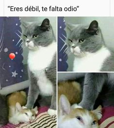 10 Reasons Why Cats are Better Than Dogs Funny Spanish Memes, Funny Relatable Memes, Best Memes, Dankest Memes, Baby Animals, Cute Animals, Clean Memes, Barbie, Lol League Of Legends