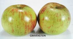 Sebastopol Gravenstein Apple; My grandmother and entire family agrees that they are the preferred apple for pies.
