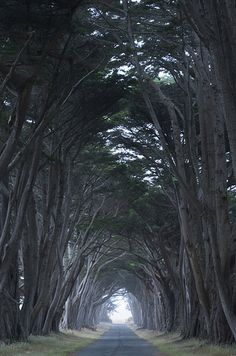 Point Reyes in California, United States. This California cape is roughly 30 miles from San Francisco and is home to more than 1,500 species of plants and animals. Walking down this road at night seems like something you would see in a horror movie, but it's beautiful nonetheless.