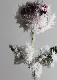 TOKUJIN YOSHIOKA, ROSE: crystallized flower sculpture.