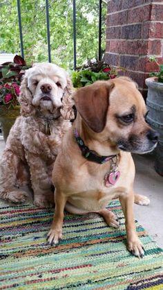 Zoe and Buddy Gladys