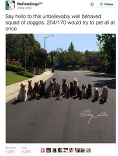 And this motorcycle gang. *does math* 15834/83928 | Admit It, This Funny AF Twitter Account Is What We All Do To Dogs IRL