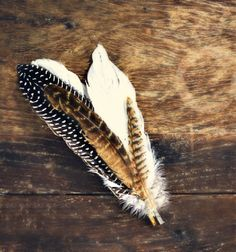 White, black, and brown spotted feathers