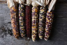 #Flint Corn on Rustic Wood Table  High angle shot of a group of flint corn cobs. Also known as Indian Corn Calico Corn and Ornamental Corn.
