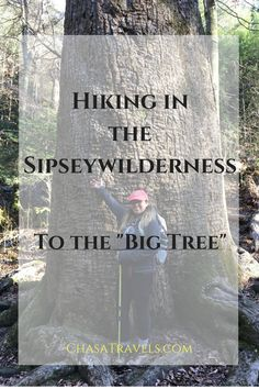 Hiking in the Sipsey Wilderness: to the big tree! Do you have what it takes? Hike to the biggest tree in Alabama!